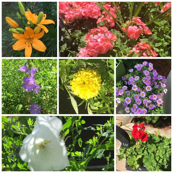 Flowercollage.jpg