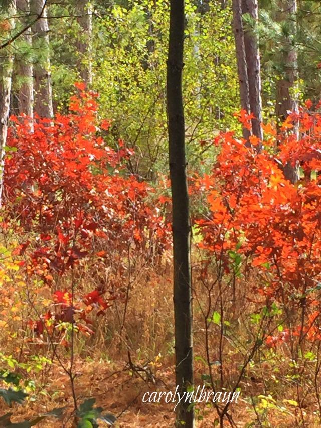 woods1.jpg