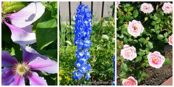 Munsteinger Gardens collage 2.jpg