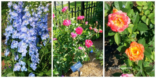 Munsteinger Gardens collage 4.jpg