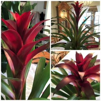 plantcollage.jpg