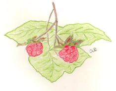 raspberries clb.jpg